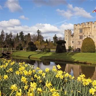 Hever Castle Dazzling Daffodils