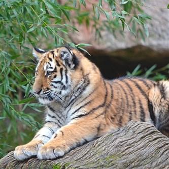 Zoos/Wildlife Parks